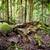 плотный · бамбук · лес · Киото · Япония · дерево - Сток-фото © thp