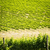 australiano · vina · hermosa · paisaje · grande · goma - foto stock © thp