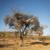 weaver birds nests africa stock photo © thp