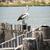 ül · öreg · fából · készült · posta · tenger · part - stock fotó © THP