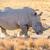white rhino stock photo © thp