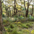 австралийский · пейзаж · лес · юг · глубокий · ручей - Сток-фото © THP