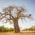 african · albero · meridionale · africa · cielo · natura - foto d'archivio © thp