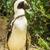 penguen · buz · soğuk - stok fotoğraf © thp