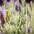 молиться · закрыто · белый · природы · саду - Сток-фото © thp