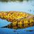 aligátor · folyó · park · Botswana · Afrika · víz - stock fotó © THP