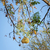 weaver bird nests stock photo © thp