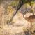 impala africa stock photo © thp