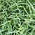 gras · vorst · bladeren · textuur · sneeuw · kleur - stockfoto © thp