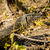 groot · monitor · hagedis · kanaal · water · gras - stockfoto © thp