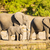 elephant herd at rivers edge stock photo © thp