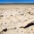 rachado · secas · lama · textura · deserto · laranja - foto stock © thp