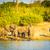 olifant · kudde · stoffig · natuur · afrikaanse - stockfoto © thp