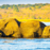 elephant herd crossing chobe river stock photo © thp
