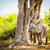 olifant · baby · stand · beschermd · koe · stier - stockfoto © thp