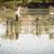 folyó · Dél-Ausztrália · víz - stock fotó © THP