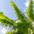 banana · plantação · tiro · árvore · fruto - foto stock © thp