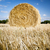 hay bales stock photo © thp