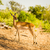 群れ · ボツワナ · サバンナ · 草 · 自然 · 光 - ストックフォト © thp