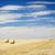 сено · полях · лет · время · урожай · небе - Сток-фото © THP