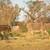 afrikaanse · landschap · Botswana · dramatisch · bomen · regen - stockfoto © thp