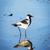 árvore · primavera · pássaro · azul · preto · branco - foto stock © thp