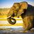 olifant · water · afrikaanse · olifant · spelen · park · Namibië - stockfoto © thp