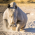 white rhino angry stock photo © thp