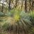 австралийский · пейзаж · трава · деревья · юг · глубокий - Сток-фото © THP
