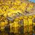 aligátor · mérleg · részlet · farok · vad · naplemente - stock fotó © THP