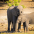 elefánt · szülő · fiatal · baba · állatok · állat - stock fotó © thp