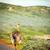 страус · хорошие · надежды · полуостров · ЮАР · трава - Сток-фото © thp