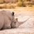 白 · サイ · 公園 · 南アフリカ · 自然 - ストックフォト © thp