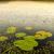 liliom · lebeg · víz · alatt · kert · nyár - stock fotó © thp