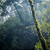 forest stock photo © thp