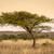 afrikaanse · boom · landschap · mooie · park · Zimbabwe - stockfoto © thp