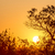 África · puesta · de · sol · árboles · desierto · Sudáfrica · árbol - foto stock © thp
