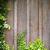 lierre · mur · cadre · croissant · bois · chambre - photo stock © thp