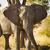african elephant portrait stock photo © thp