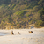 пляж · волны · кенгуру · острове · Южная · Австралия · морем - Сток-фото © thp
