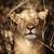 sudáfrica · retrato · hermosa · animales · frescos - foto stock © tiero
