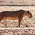 alto · grama · reserva · Quênia · África · leão - foto stock © tiero