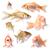 goldfish · colección · grupo · aislado · blanco - foto stock © tiero