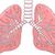 insan · akciğer · beyaz · örnek · tıbbi · arka · plan - stok fotoğraf © tigatelu