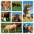 collage of cattle on the field stock photo © tish1