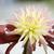 blooming dahlia flower stock photo © tito