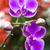 蘭 · 花 · ピンク · 自然 · 葉 - ストックフォト © tito
