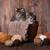 котят · пряжи · студию · прелестный · любви - Сток-фото © tobkatrina