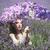 joli · jeune · fille · extérieur · lavande · champ · de · fleurs · belle - photo stock © tobkatrina