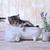 bonitinho · adorável · gatinho · banheira · relaxante · engraçado - foto stock © tobkatrina